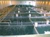Фермеский комплекс для выращивания рыбы в УЗВ